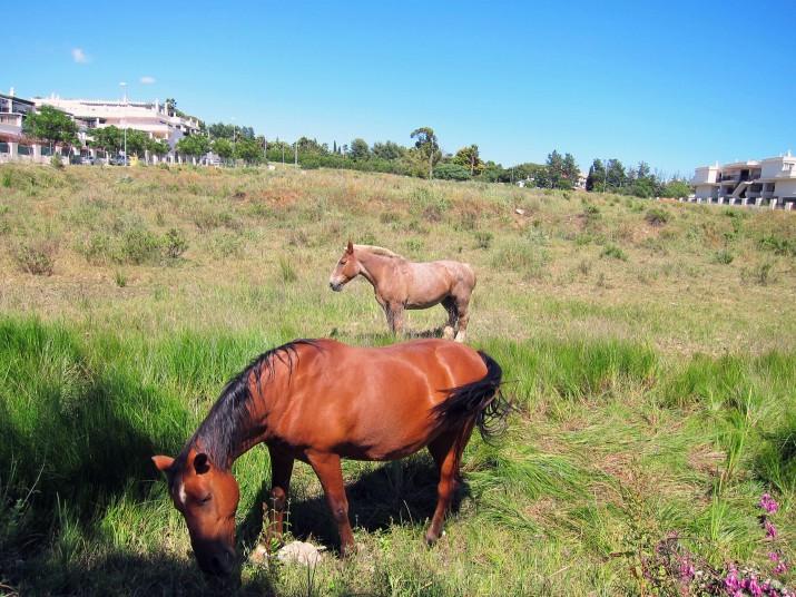 Hästarna var ju så stora (och tjocka!)